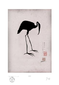 Antique Ibis